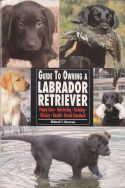 Guide to Owning a Labrador Retriever